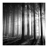 Wood Light Prints by  PhotoINC Studio