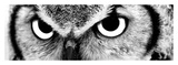 Owl Prints by  PhotoINC Studio
