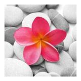 Zen Flower Prints by  PhotoINC Studio