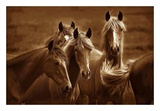 Belles de l'Ouest Affiches par Tony Stromberg