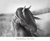 Fierce Grace Posters af Tony Stromberg