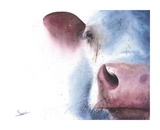 Watercolor Cow Posters by Eric Sweet
