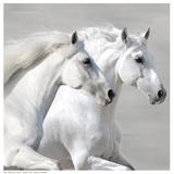 Winter Gallop (detail) Poster af V. Makarova