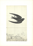 Untitled Collectable Print by Alain Le Yaouanc