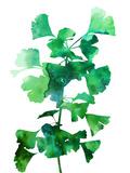 Eco Garden - Ginko Giclee Print