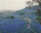 Bluebonnet Field, Early Morning, San Antonio Texas Giclee Print