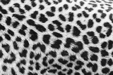 Leopard Patterns Giclee Print