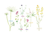 Field Flower Composite Giclee Print