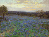 Field of Bluebonnets at Sunset Giclee Print