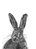 Hare Impression giclée