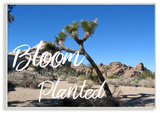 Bloom Where You're Planted Joshua Tree Wall Plaque Art Wood Sign