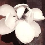 Magnolia Blue II Prints by Katrina Craven