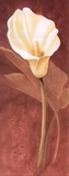 Calla Lily Posters by John Clayton