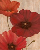 Poppy Trio I Prints by Vivian Flasch