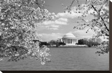 Jefferson Memorial with cherry blossoms, Washington, D.C. - Black and White Variant Stretched Canvas Print by Carol Highsmith