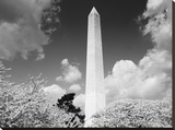 Washington Monument and cherry trees, Washington, D.C. - Black&W Stretched Canvas Print by Carol Highsmith