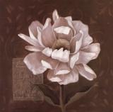 Petal Soft I Art by Carol Robinson