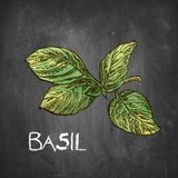 Basil on Chalkboard Posters by  Color Me Happy