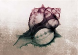 Ombre Sea Shell X-Ray Poster by  Color Me Happy