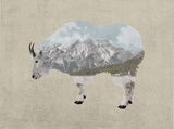 Rocky Mountain Goat Poster by  Color Me Happy