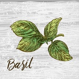 Basil on Wood Prints by  Color Me Happy