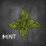 Mint on Chalkboard Prints by  Color Me Happy