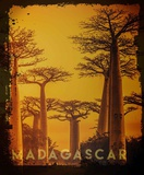 Vintage Baobab Trees in Madagascar, Africa Art by  Take Me Away
