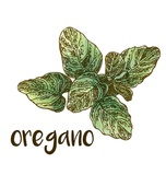 Oregano Prints by  Color Me Happy