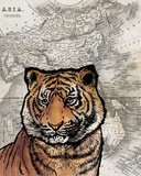 Asian Tiger Poster by  Color Me Happy