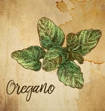 Oregano on Burlap Posters by  Color Me Happy