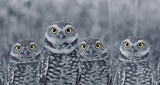 Pop of Color Burrowing Owl Family Art by  Color Me Happy