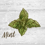 Mint on Wood Posters by  Color Me Happy