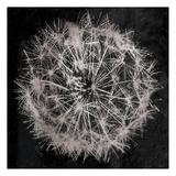 Rich Silver Dandelion Art