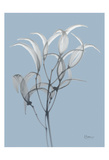 Skyway Oleander Bush Posters