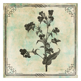 Bordered Stencil Floral Mate Prints