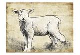 Vintage Lamb Sketch Posters
