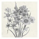 Terrarium Floral Prints