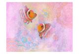 Clownfish Pair Prints