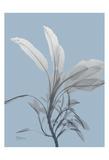 Skyway Sage Poster