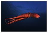 Red Octopus Gicléedruk van Barathieu Gabriel
