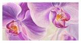 Purple Orchids Giclee Print by Cynthia Ann