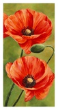 Poppies in the wind II Giclee Print by Luca Villa