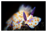 Nudibranche Giclee Print by Barathieu Gabriel