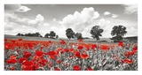 Poppies and vicias in meadow, Mecklenburg Lake District, Germany Giclee Print by Frank Krahmer