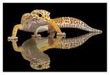 Leopard Gecko Giclee Print by Dikky Oesin