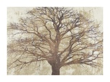Sacred Oak Giclee Print by Alessio Aprile