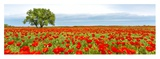 Tree in a poppy field Giclee Print by  Anonymous