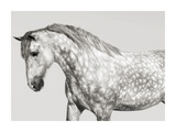 Leia, Andalusian Pony Giclee Print by  Pangea Images
