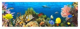 Life in the Coral Reef, Maldives Giclee Print by  Pangea Images