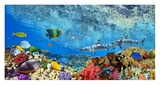 Reef Sharks and fish, Indian Sea Giclee Print by  Pangea Images